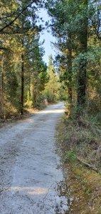 Entrance through pine trees